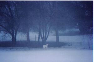 Misty Morning Cain