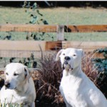 Canine lumps & bumps video, canine cancer